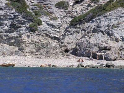 Cala del Corvo all'Isola del Giglio