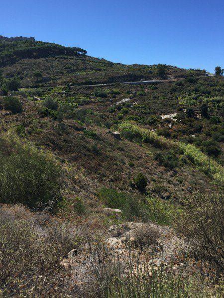 Terreno Isola del Giglio con annesso agricolo in vendita a Giglio Campese