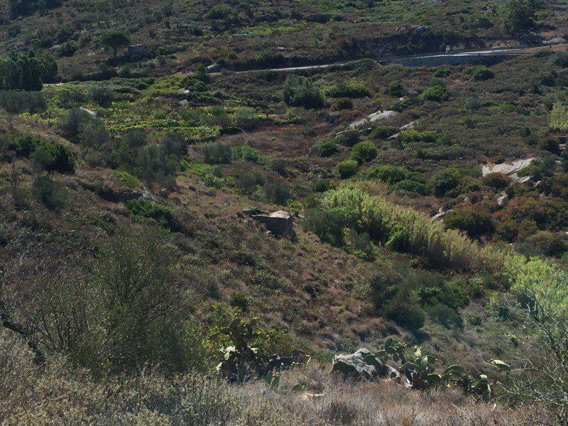 terreno in vendita comprensivo di annesso agricolo in vendita a Giglio Campese