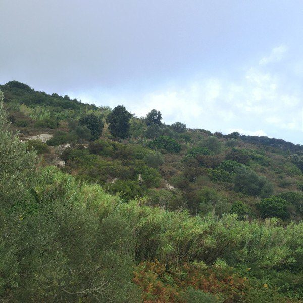 Terreno in vendita ad Isola del Giglio Campese, comprensivo di annesso agricolo da ristrutturare
